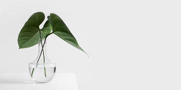 idees recues minimalisme